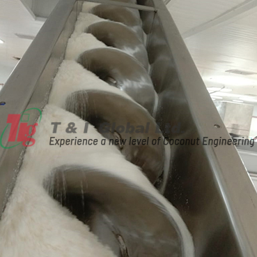 Screw Conveyor carrying Desiccated Coconut Powder